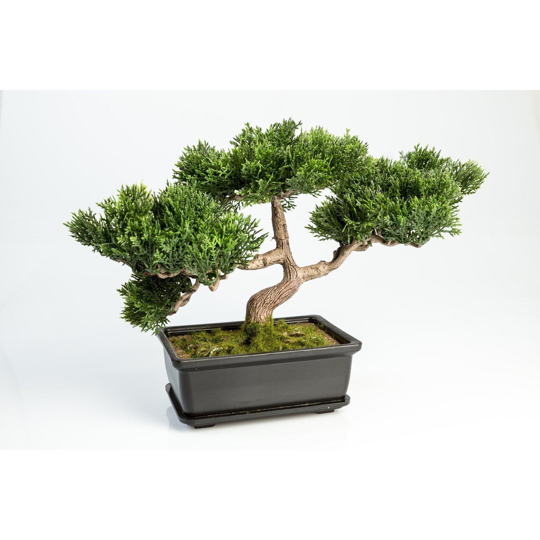 bonsái japonés miniatura