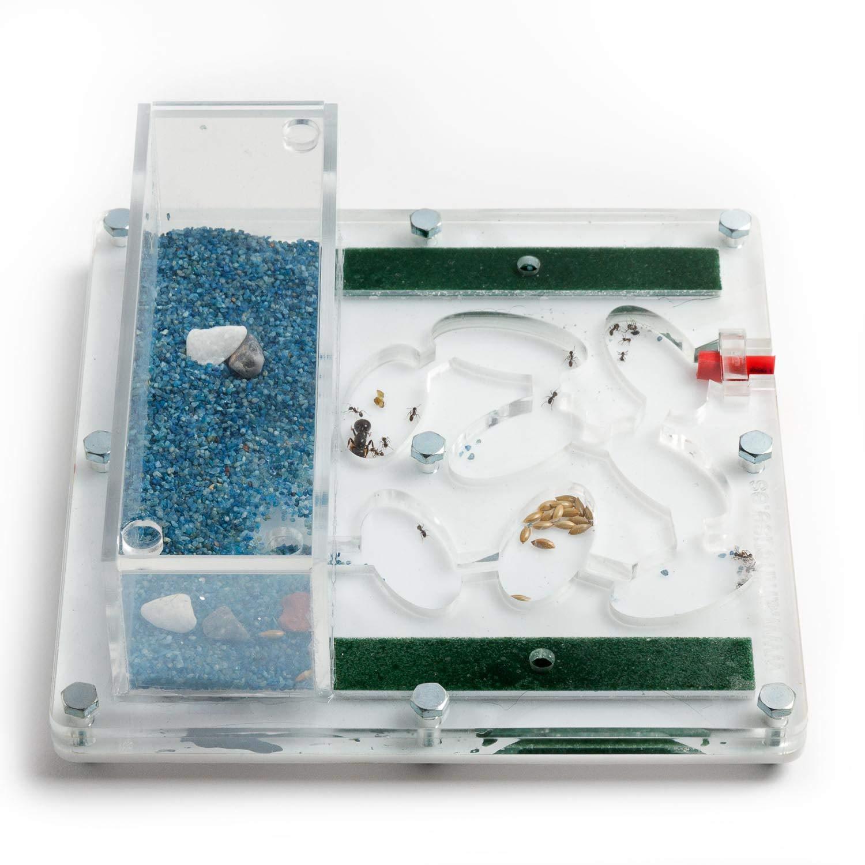 Hormiguero Acrilico Educativo 15x15x1cms (con Hormigas Gratis) (AntHouse.es): Amazon.es: Juguetes y juegos