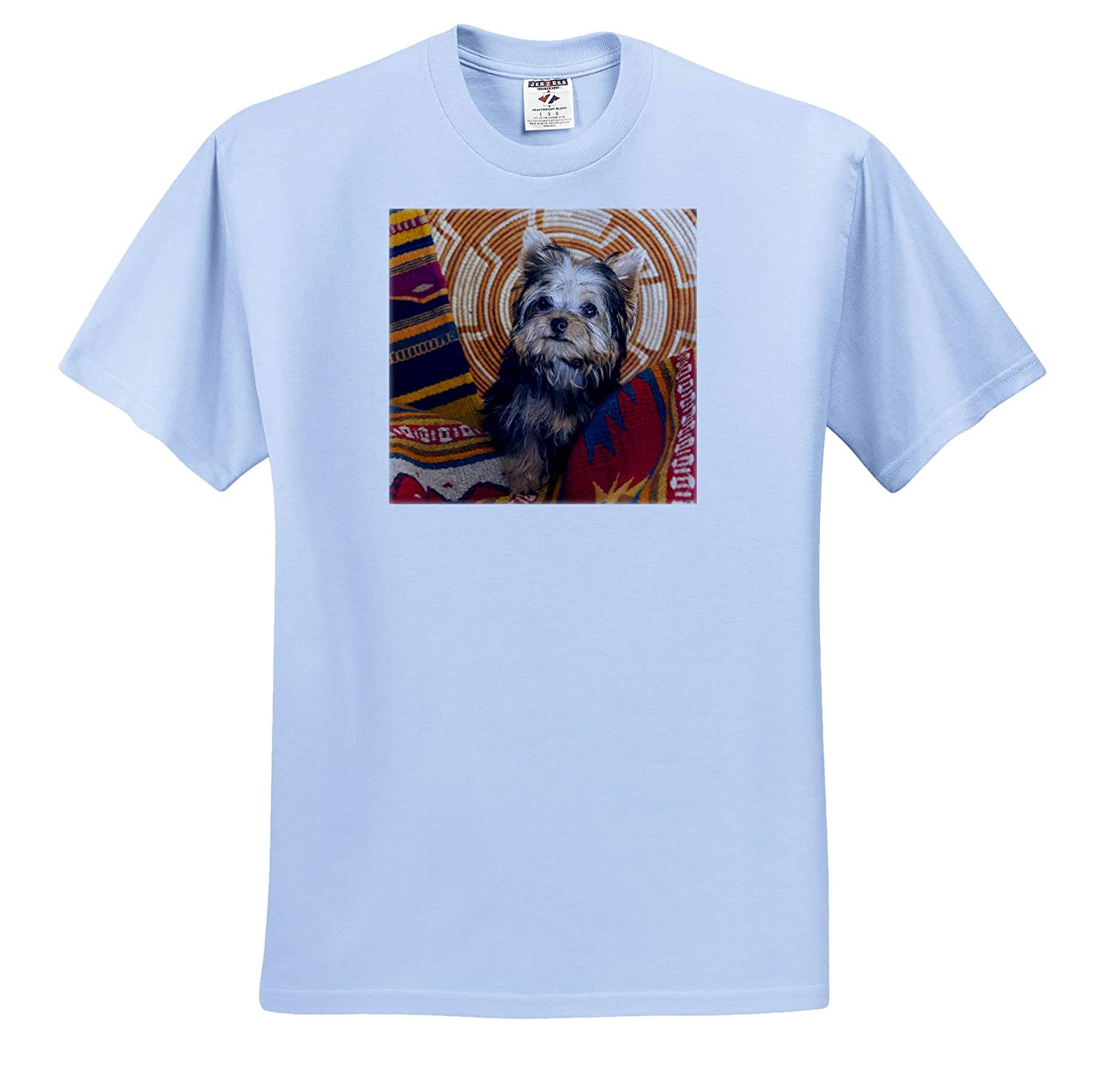 Dogs 3dRose Danita Delimont Yorkshire Terrier Sitting on Southwestern Blankets Adult T-Shirt XL ts/_314734