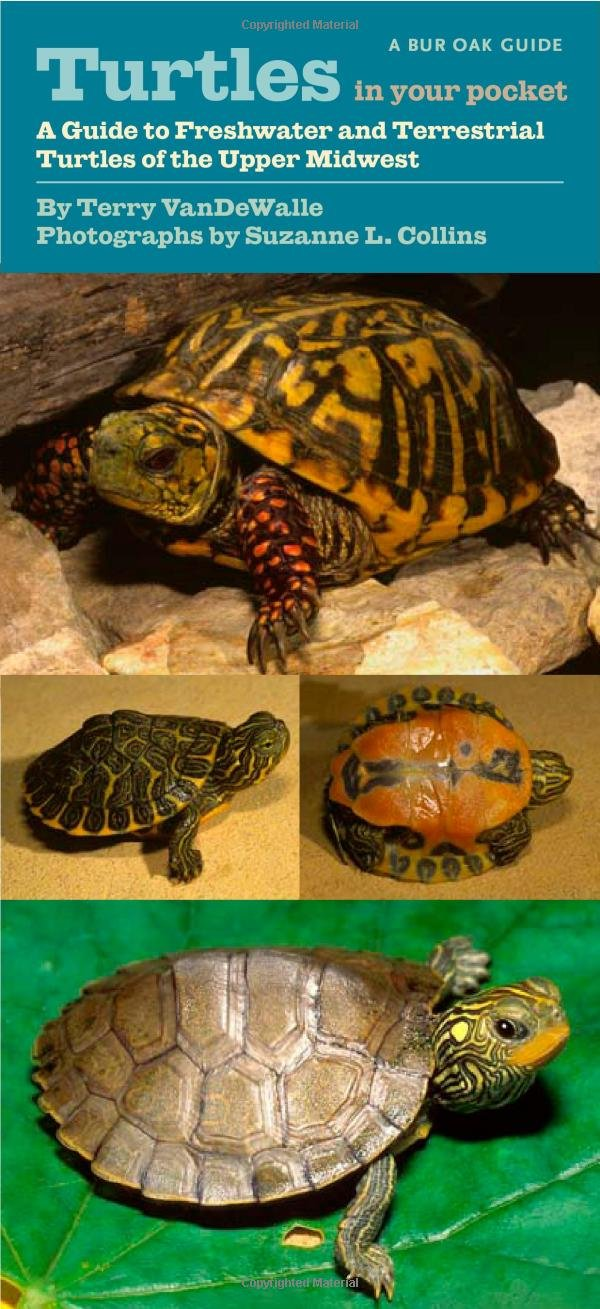 Turtles In Your Pocket  Bur Oak Guide