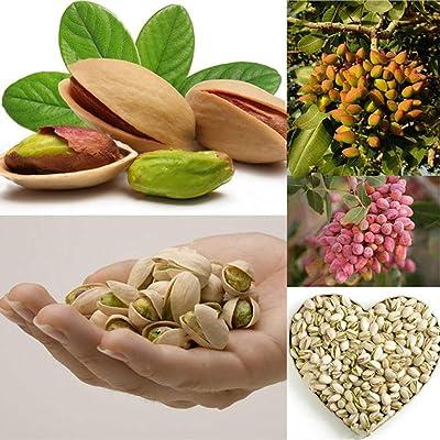 HOTUEEN Nice Adorable Multi-funciton Rich Nutrition Blooms Pistachio Seeds Trees : Garden & Outdoor