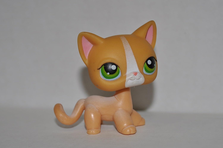 Amazon.com: Shorthair Kitten #72 (4 Paws: Orange, Green Eyes ...
