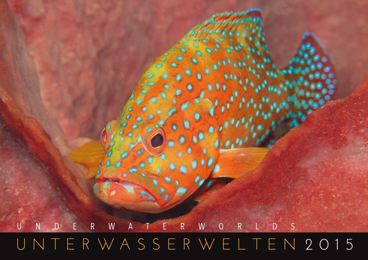 Unterwasserwelten 2015: Underwater Worlds 2015