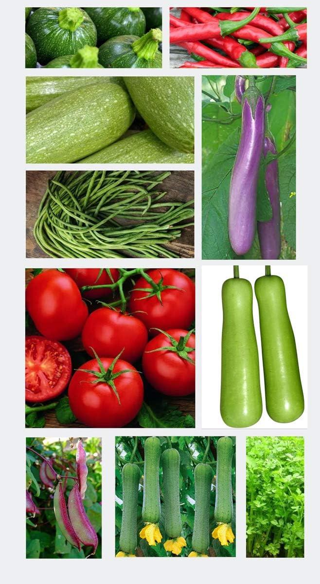 Heirloom Vegetable Mix Seeds 10 Varieties Seed Packets Non-GMO Spring Summer Garden