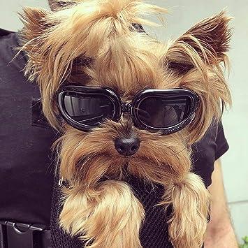 ff2ccafc11 Dog Goggles Gafas para perros pequeños impermeable Anti-UV-gafas de sol para  Hündchen - Kailian: Amazon.es: Productos para mascotas