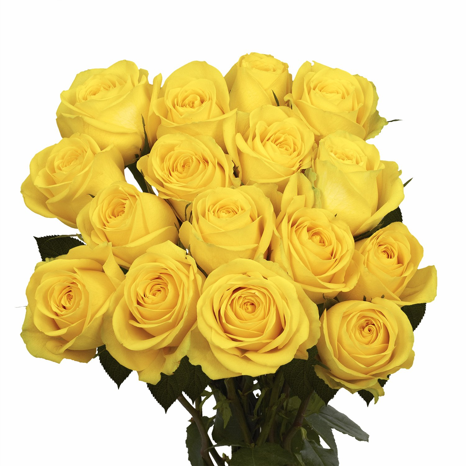 GlobalRose 100 Yellow Roses- Flower Delivery- Fresh Cut Long Stem by GlobalRose