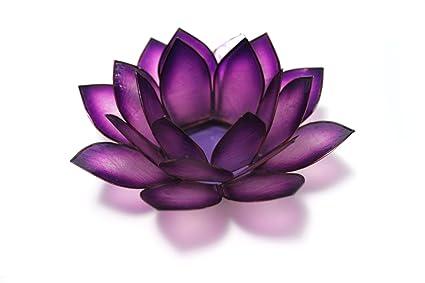 2a7b626254 Amazon.com: Om Gallery Capiz Shell Lotus Tea Light Holder, Passion ...
