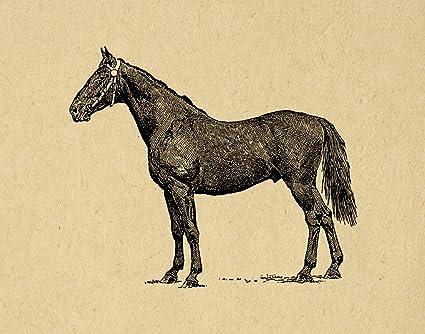 Amazon.com: Antique Style Horse Print Farm Animal Wall Art Picture ...