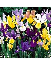 Bulbi da Fiore ALTA QUALITA' per fioritura PRIMAVERILE