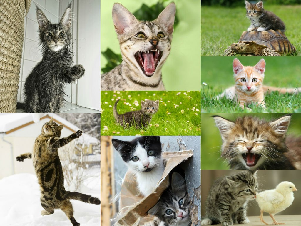 """""""CAT POSTCARDS"""": Pack of 18 postcards of cute cats and kittens - best for cat lovers, postcard collectors and postcrossing EDITION COLIBRI"""
