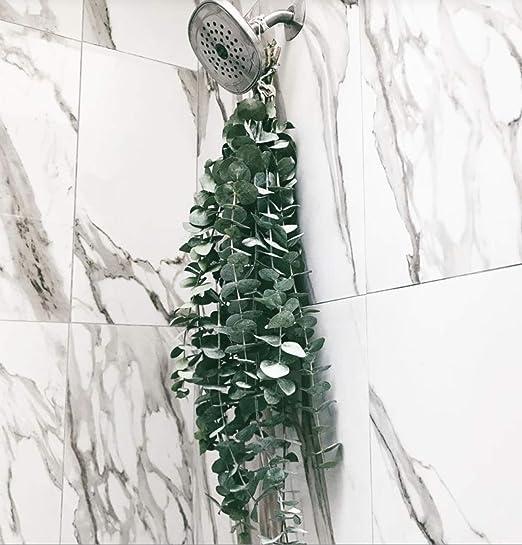 Amazon.com: Eucalipto fresco, ducha de eucalipto fresco ...
