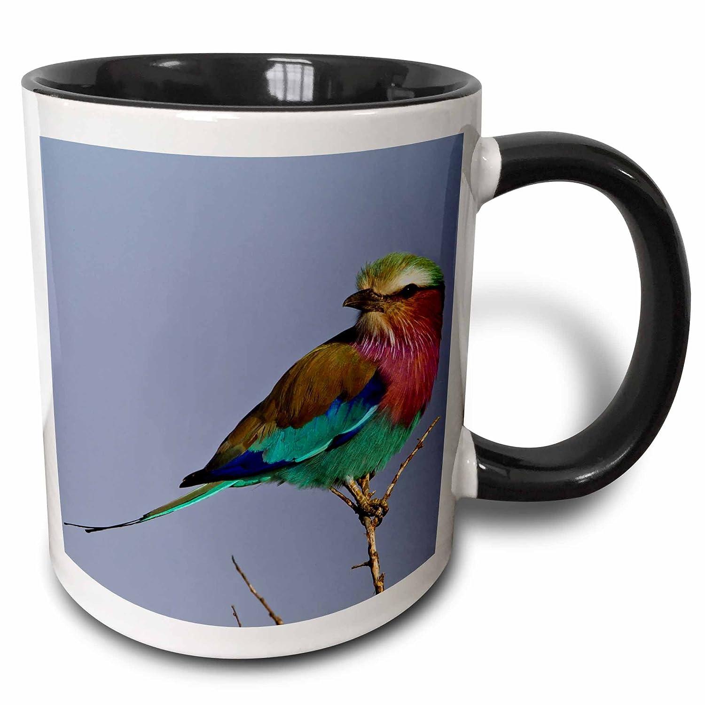 Buy 3drose Danita Delimont Birds Lilac Breasted Roller Bird Maasai Mara Kenya Af21 Aje0784 Adam Jones 11oz Two Tone Black Mug Mug 131783 4 Online At Low Prices In India Amazon In