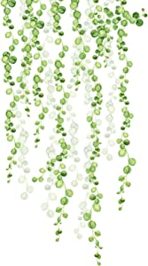 String of Pearls Vine Peel and Stick Wall Decals Green Tree Leaf Wall Decal Hanging Vine Watercolor Hanging Vine Watercolor Peel Wall Sticker Nature Hanging Branch Wall Decor for Kitchen Living Room