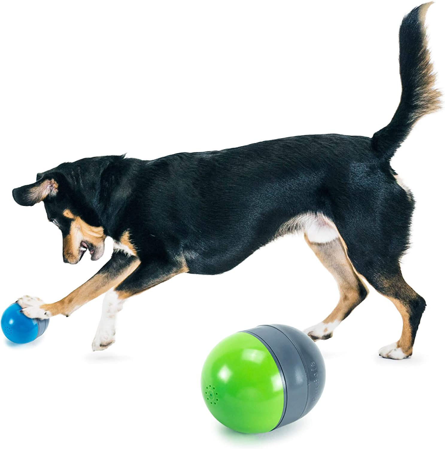PetSafe Kibble Nibble and Ricochet - Interactive Dog Toys - Engaging Puzzles for Bored, Anxious or Energetic Pets