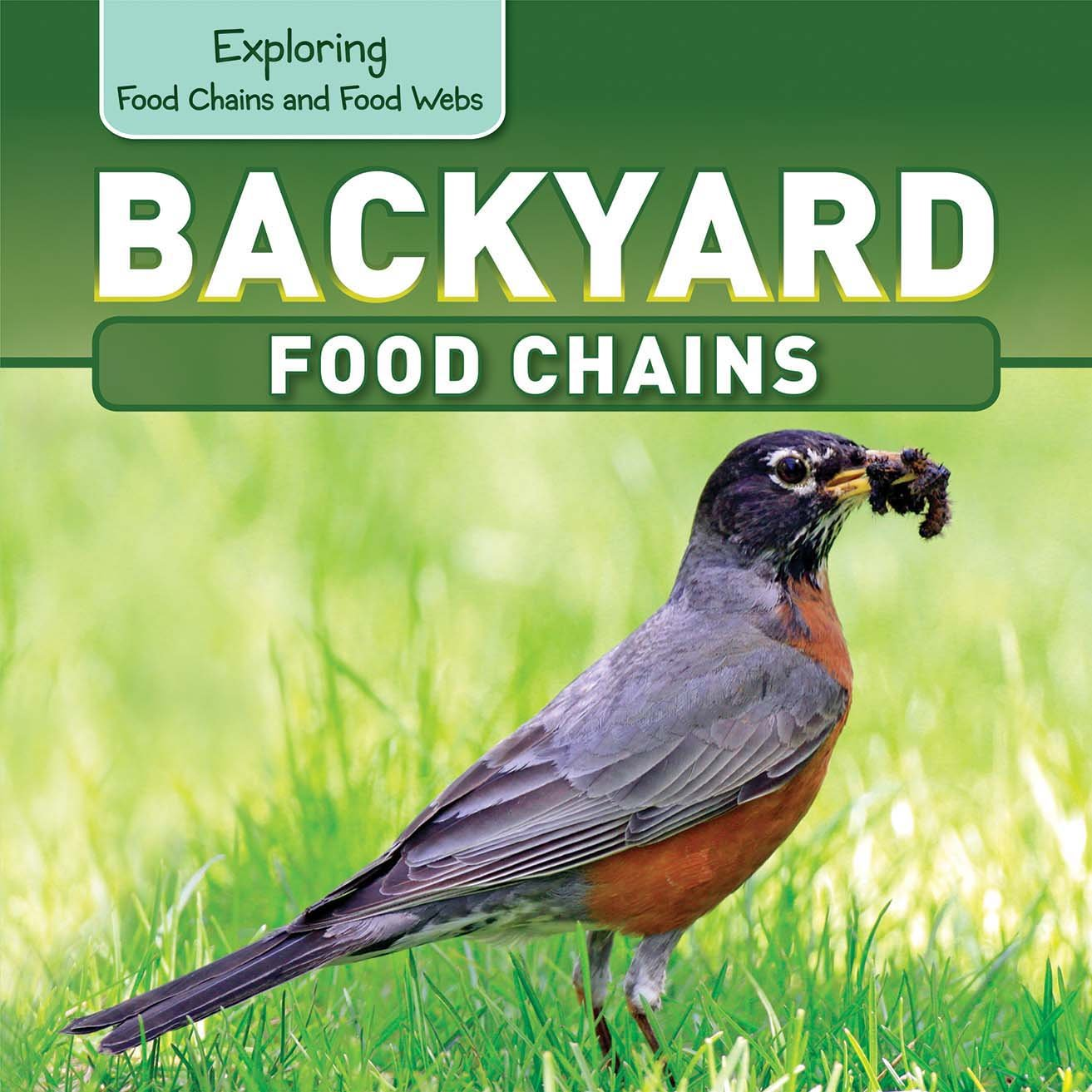 backyard food chains exploring food chains and food webs katie