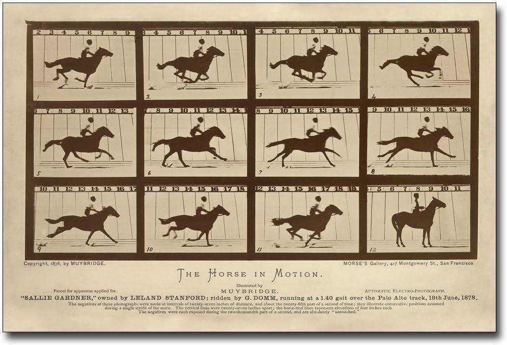 1887 Muybridge/'s Horse Galloping Vintage Print 11x14 Unframed Print Perfect