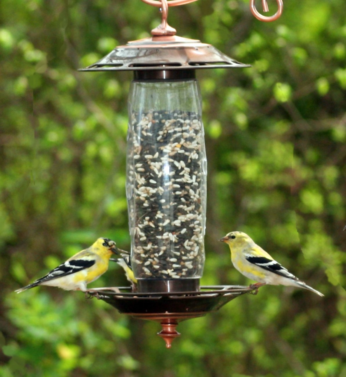 Perky-Pet 737S Sip or Seed Wild Bird Feeder