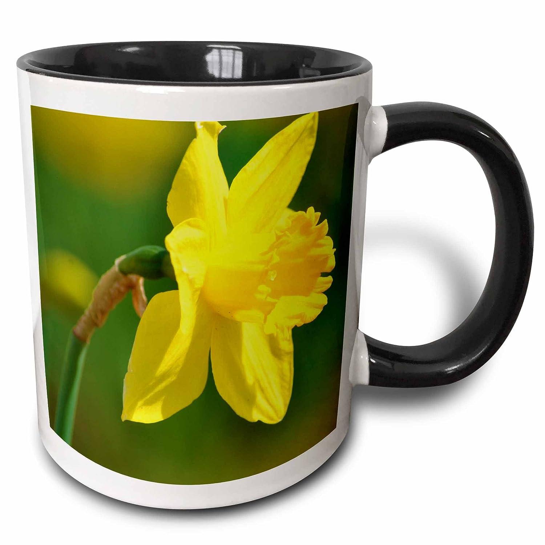 Floral Photography Two Tone Black Mug Multicolor 3dRose mug/_47766/_4Pretty Spring Daffodil Flower 11 oz