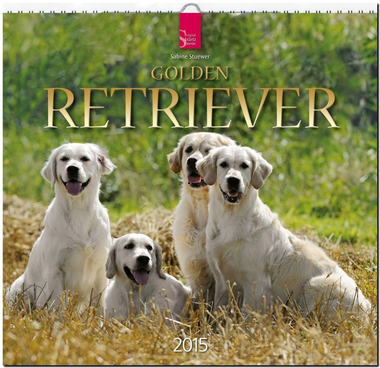 Golden Retriever 2015 - Original Stürtz-Kalender - Mittelformat-Kalender 33 x 31 cm