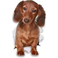 Winston & Bear 3D Dog Stickers - 2 Pack - Long Haired Dachshund for Wall, Fridge, Toilet and More - Retail Packaged Long…
