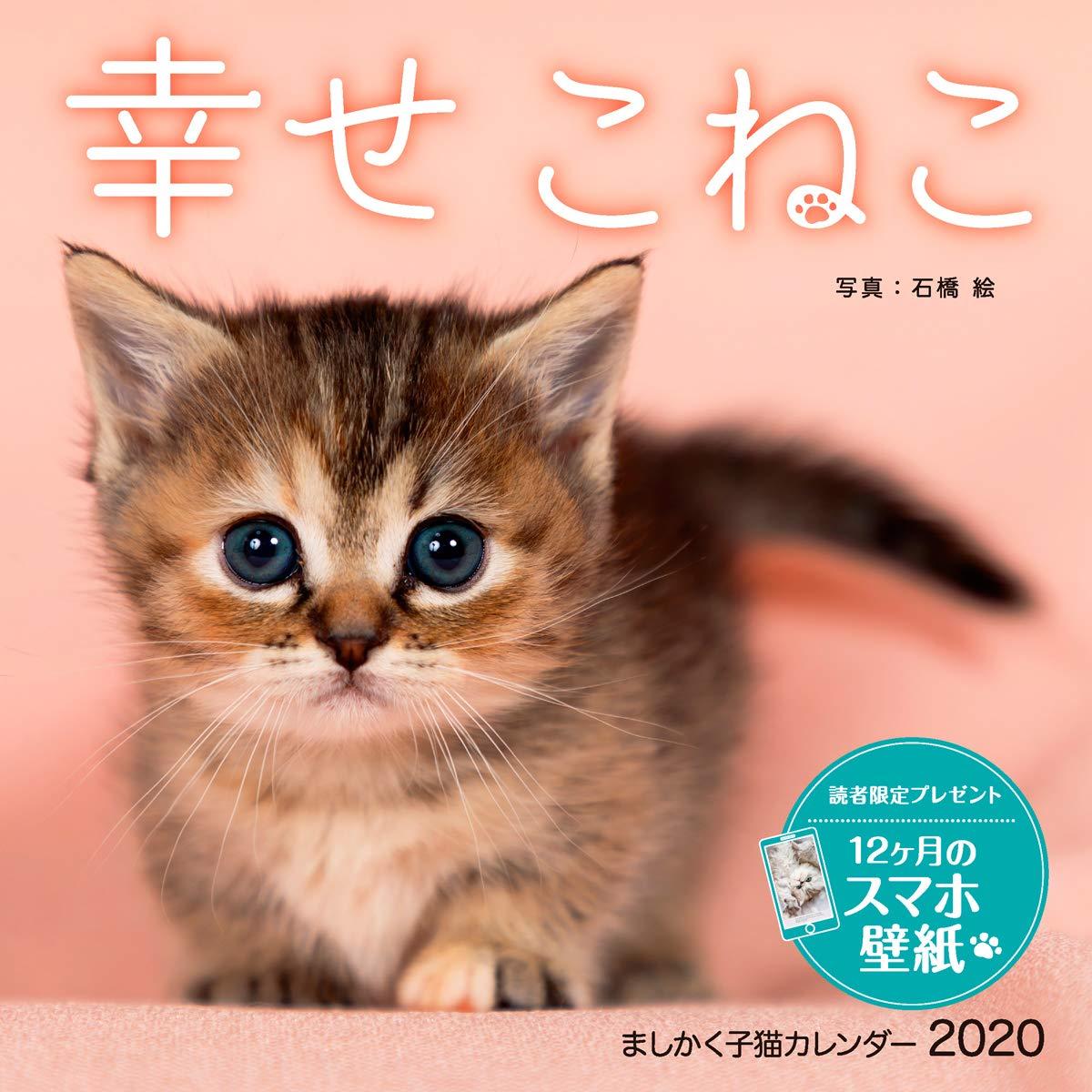 ましかく子猫カレンダー 幸せこねこ インプレスカレンダー2020