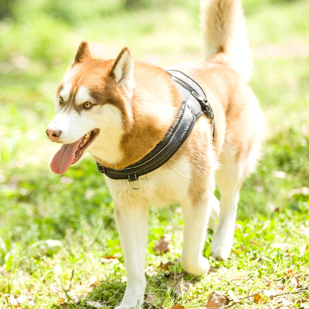 Mihachi Dog Harness with Leash with Handle No Pull No Chock Adjustable Padded Vest Harness for Dogs,Black,L by Mihachi (Image #7)