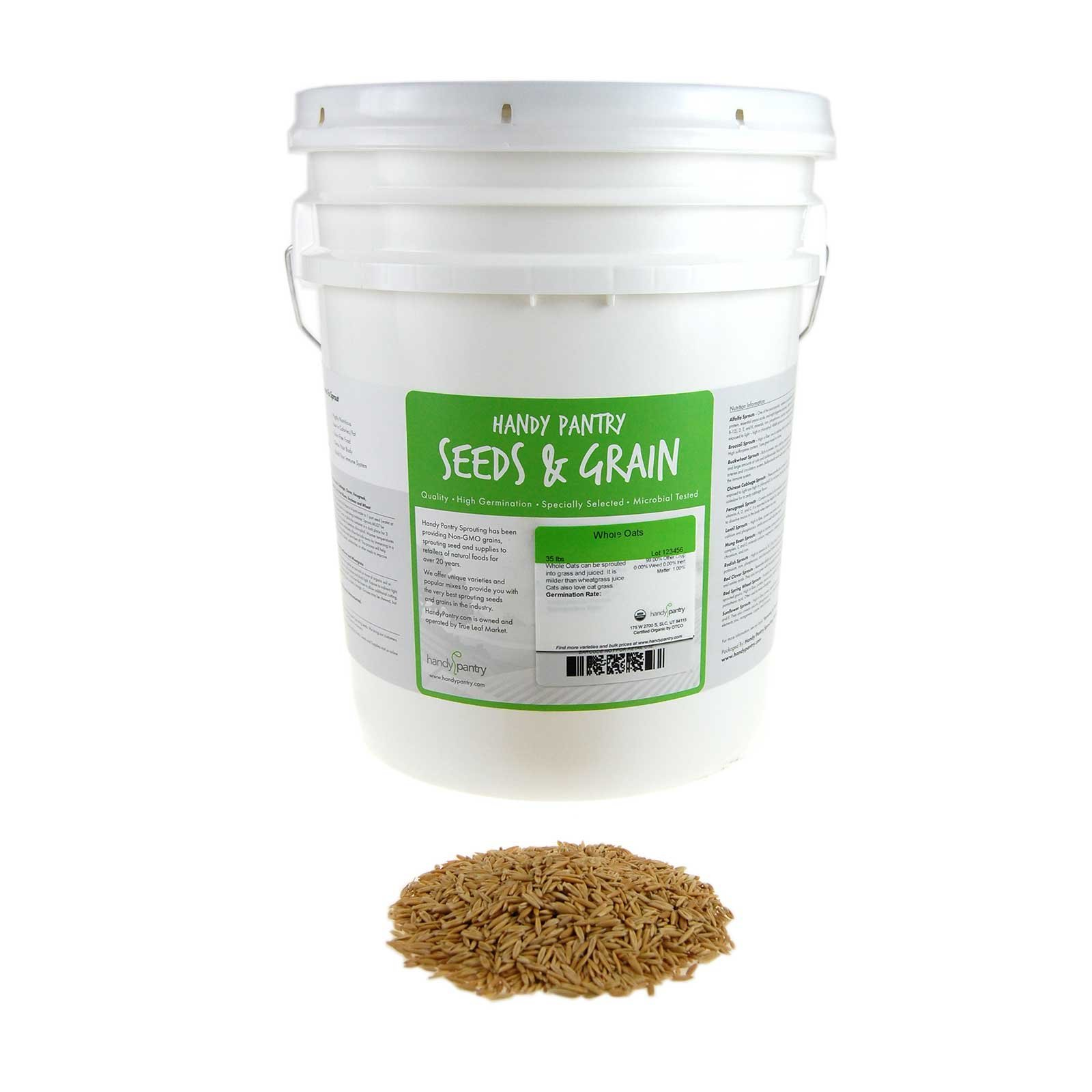 Organic Non-GMO Whole Oat Grain Seeds (With Husk Intact)- 25 Lb Re-Sealable Bucket- Oats Seed Grains, for Sprouting, Oat Grass, Animal Feed, Storage & More