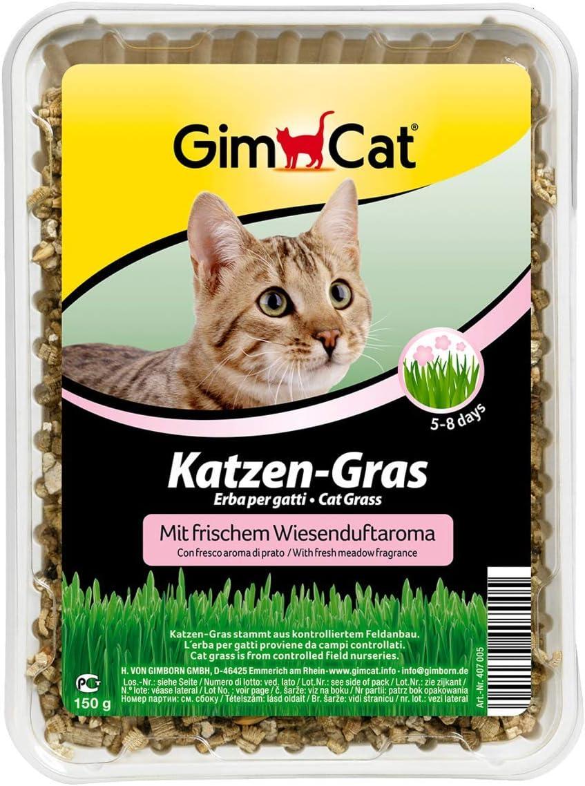 GimCat hierba para gatos con aroma a pradera - Hierba para gatos de plantación controlada - De rápido cultivo en 5-8 días - 1 bandeja (1 x 150 g)
