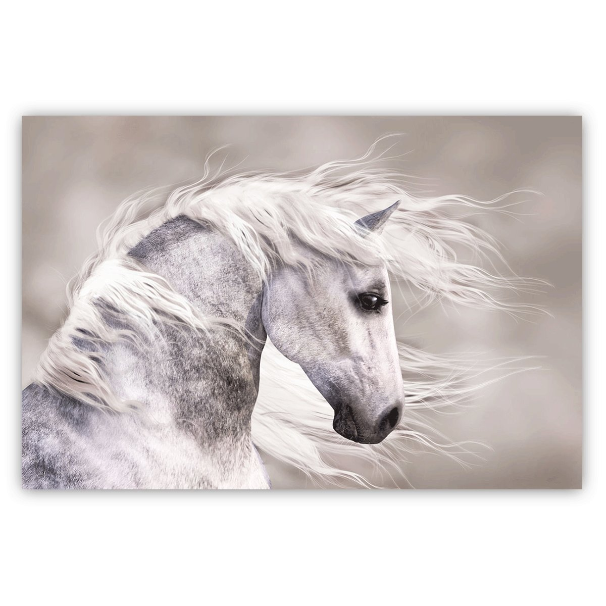 Studio 500, Museum Grade Canvas Art - Natures Beauty The White Horse in Black & White, 48'' x 32'' High Resolution Giclee Printing, from Our Global Collection, H0027