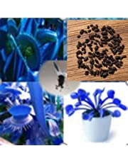 Adolenb Seeds House- 50 pièces Dionaea, Blue Venus Flytrap, rare Dionaea Muscipula Graines Plantes carnivores pour balcon et terrasse
