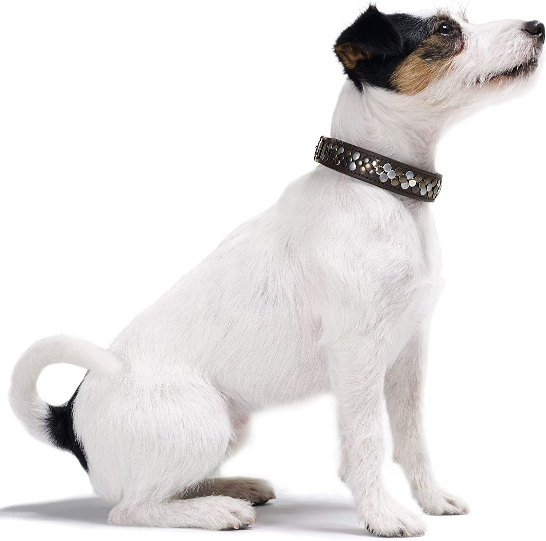 cuero HUNTER ARIZONA Collar para perros negro. con tachuelas 32