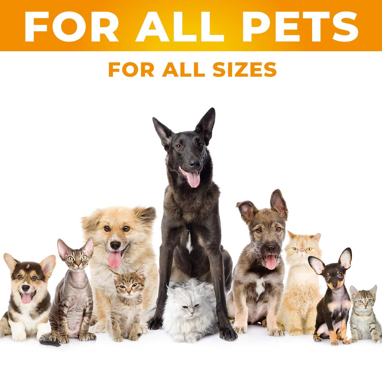 Amazon.com: SafeBay Suplemento para perros y gatos de ...