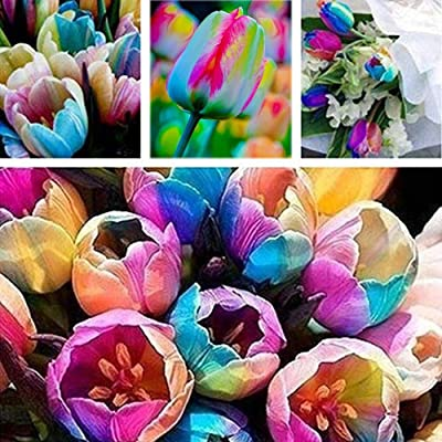Dyllutrwhe Rare Tulip Bulbs Seeds Perfume Flower Garden Potted Plant Bonsai Decor Summer Fresh Seeds for Planting 100Pcs Tulip Seeds : Garden & Outdoor
