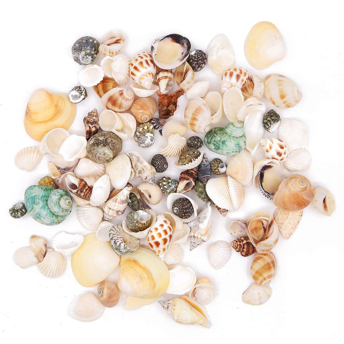 Conchas naturales conchas de playa conchas de boda exhibición manualidades acuario pecera tanque decoración 250 g: Amazon.es: Hogar