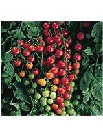 Super Sweet 100 Hybrid Tomato Seeds (40 Seed Pack)