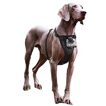 Kurgo Tru-fit Smart arnés con Soporte para cámara, tamaño Mediano, Color Negro [Mascota Suministros]: Amazon.es: Productos para mascotas