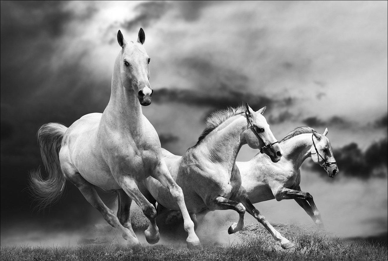 Weiße Pferde 90 x 60 cm Rahmen auf MDF-Rand schwarz: Amazon.de ...