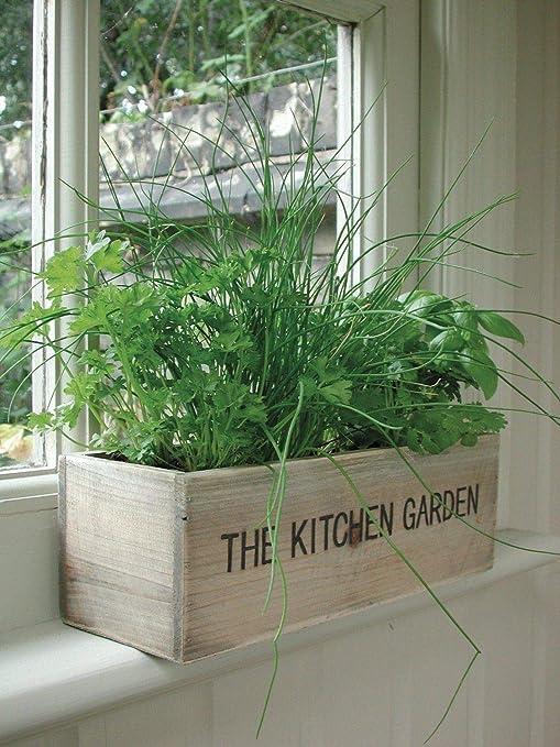 Portal Cool Cocina Jardín Kit: Kit de Hierbas de Cocina jardín Interior alféizar Balcón Caja Macetas de Madera Planter Semillas: Amazon.es: Jardín