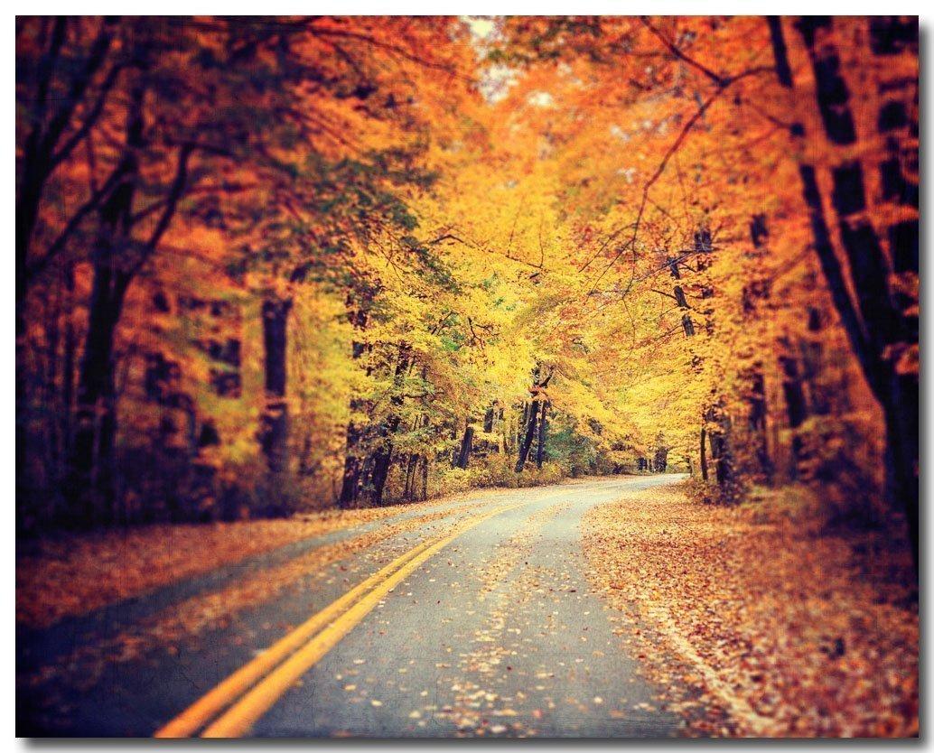 Autumn Road Photograph, Forest Photo, Orange Decor, Fall Leaves Art.