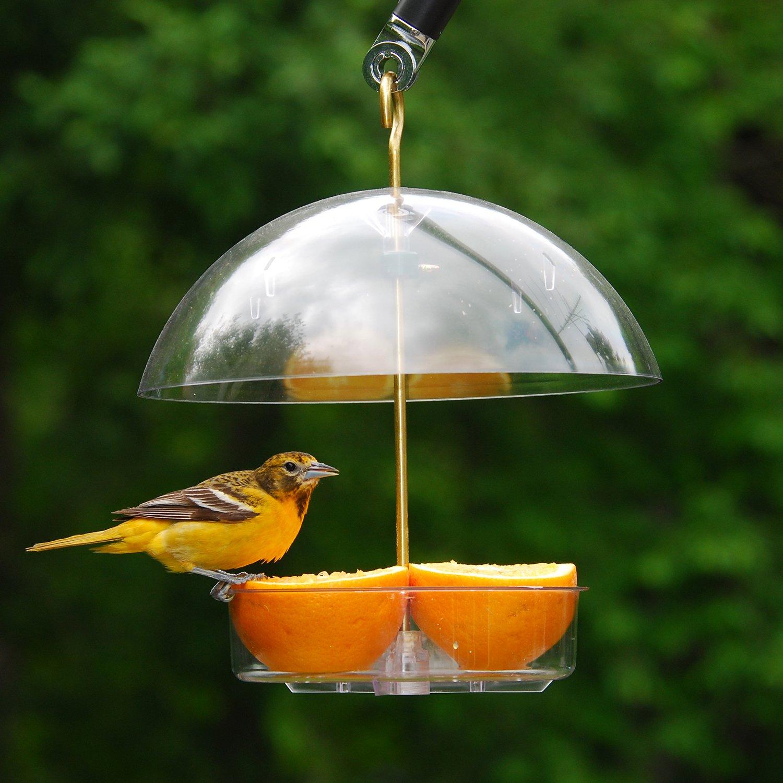 Droll Yankees Bird Feeder, Platform Cardinal Bird Feeders with Roof Cover, 10 Inch Diameter, Clear, X-1 by Droll Yankees