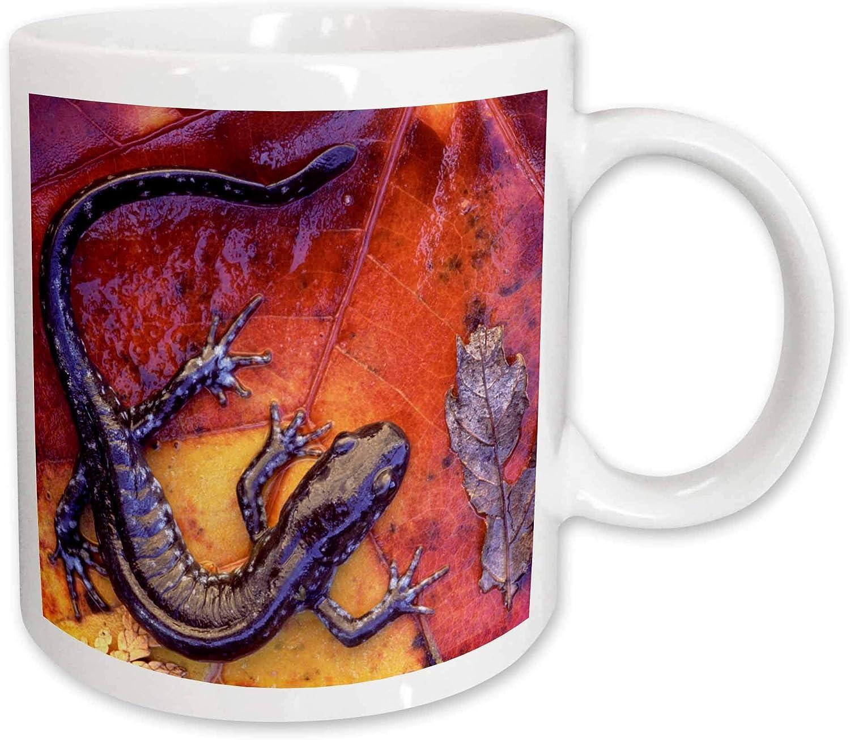 3dRose mug_73117_2 Quebec Blue-Spotted Salamander Lizards-Cn10 Bja0023 Janyes Gallery Ceramic Mug, 15-Ounce
