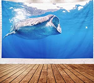 Musesh Marine Whale Wall Hanging Tapestry,Art Tapestry, Tapestries Wall Hanging for Bedroom Living Room Decor Inhouse 80x60 Inches Size Whale Sharks Swimming in Blue Waters of Isla Mujeres Mexico
