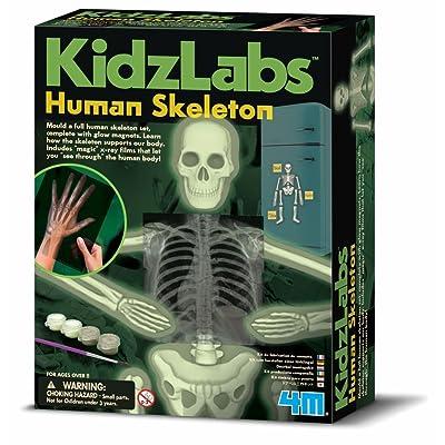 4M- Glow Human Skeleton Ciencia (00-03375): Juguetes y juegos
