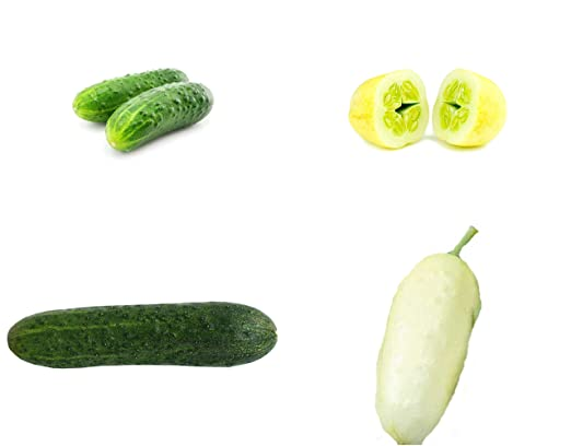 Mezcla de pepino - ¡4 tipos (