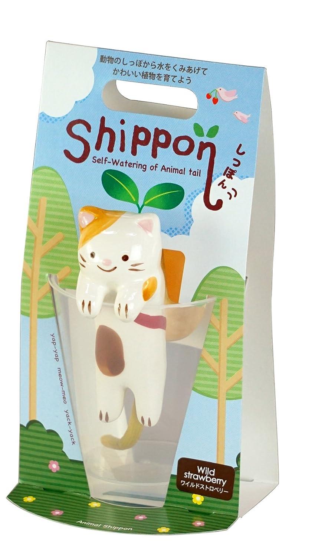 Shippon Cat Strawberry Gift/ /Maestro