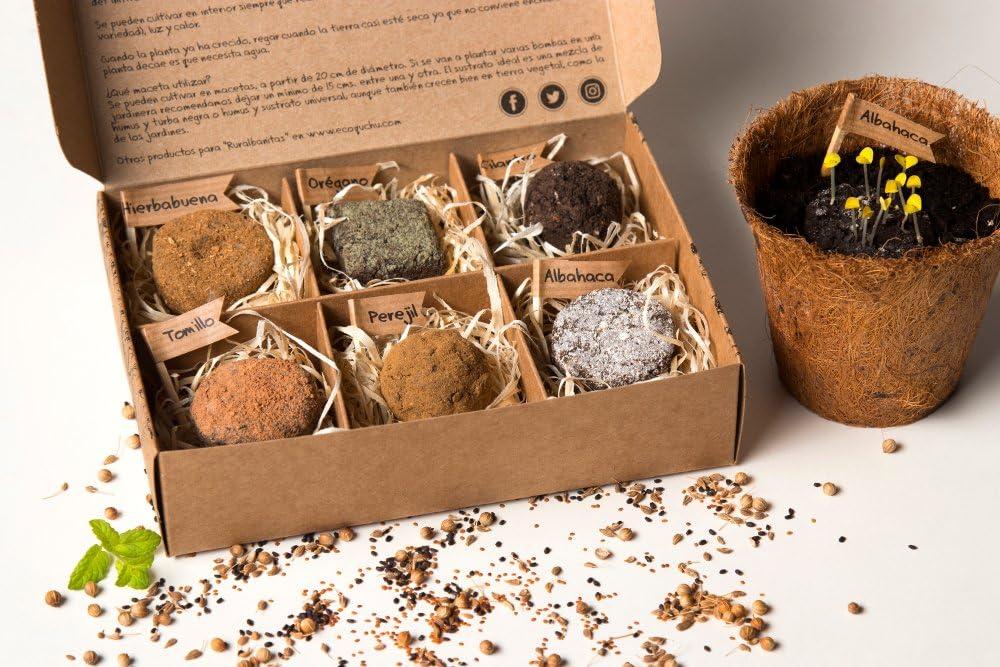 Pack 6 bombas de semillas de plantas aromáticas: Amazon.es ...