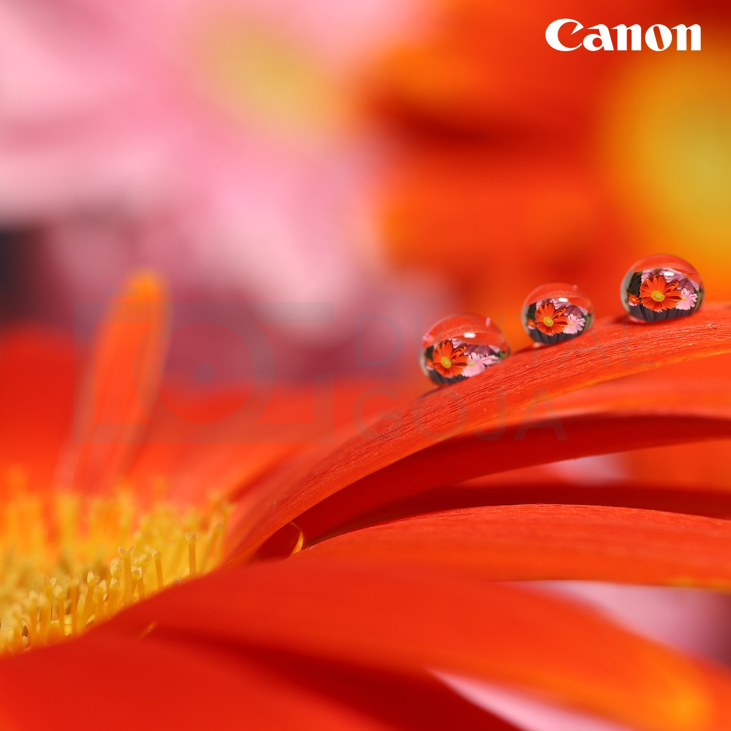 Canon EF-S 35mm f/2.8 Macro is STM Lens w/Essential Photo Bundle - Includes: Altura Photo UV-CPL-ND4, Camera Cleaning Set by Canon (Image #6)