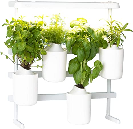 Prêt à Pousser Modulo, your versatile Indoor Garden Grow your own fresh  herbs at home, easy and all year round ❃ Including Basil, Mint, Chives and