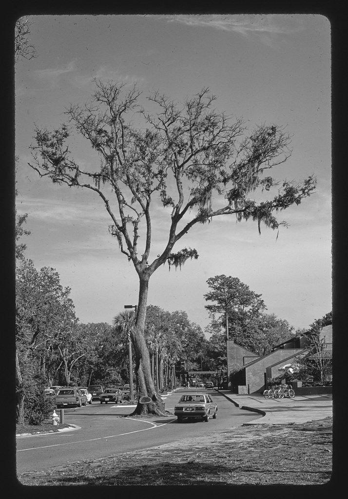 Vintography 8 x 12 BW Photo of: Sea Pines Plantation, Hilton Head Island, South Carolina 1985 Roadside America Margolies, John, 81w