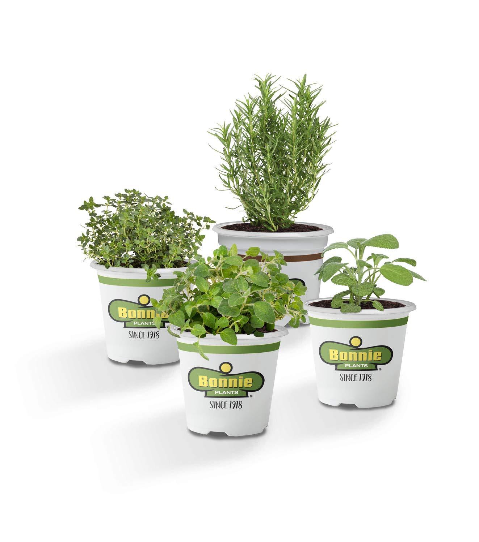 Bonnie Plants Urban Herb Plant Garden - 4 Pack Live Plants   Beginner Herb Garden   Sage, Thyme, Oregano & Lavender